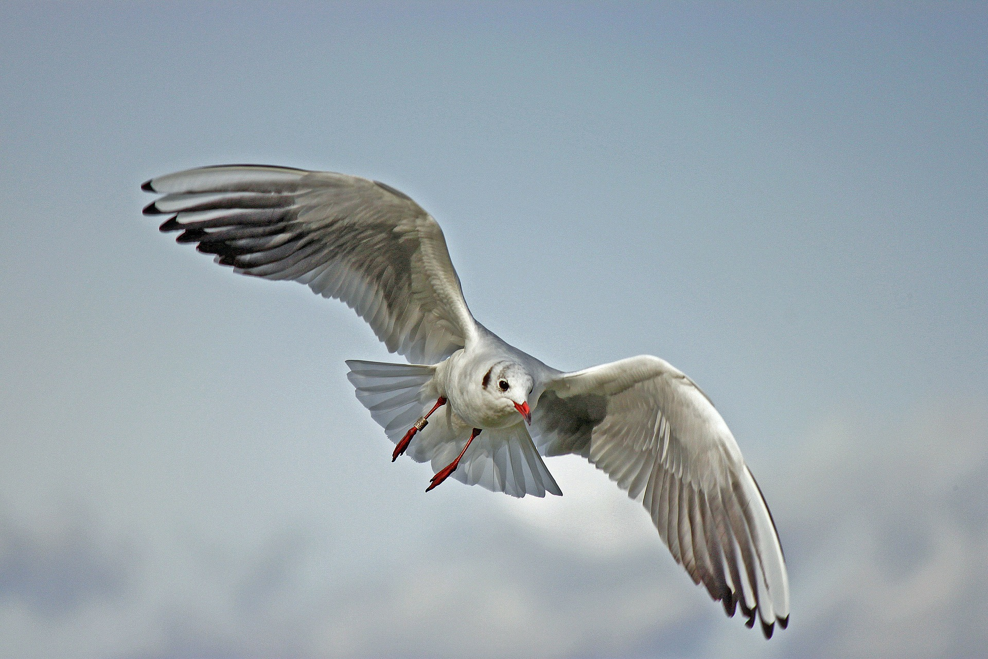 seagull-79658_1920